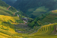 _Y2U0139.0915.La Pán Tẩn.Mù Cang Chải.Yên Bái. (hoanglongphoto) Tags: asia asian vietnam northvietnam northwestvietnam landscape scenery vietnamlandscape vietnamscenery vietnamscene outdoor morning sunlight sunny sunnymorning terraces terracedfields terracedfieldslandscapeinvetnam terracedfieldsinvietnam flanksmountain valley hillside pass road canon canoneos1dx canonef50mmf12lusmlens tâybắc yênbái mùcangchải lapántẩn phongcảnh ruộngbậcthang buổisáng nắng nắngsớm lúachín mùagặt harvest thunglũng sườnnúi sườnđồi ruộngbậcthangmùcangchải mùagặtmùcangchải lúachínmùcangchải conđường đèo ql32