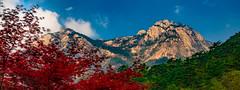 攝於黃山 雲谷索道新站 (sunnyha) Tags: mthuangshan yellowmountain peak mountain mount plant red green blue bluesky blueskyandwhitecloud skyblue sunnyha sunny day sony sonyilce7rm2 a7rll a7rm2 anhuiprovince anhui china chinese chinalandscape chineselandscape worldnaturalheritage worldheritage nature nopeople color colour colours photographier photograph photographer 中國 中国 中国風景 世界自然遺產 自然 風景 outdoors 寫真 攝影 戶外 安徽 黃山