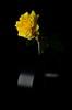 Rose in her tube (mogul) Tags: nikon d7000 35 35mm nikon35mm strobism yongnuo rose capturenx2 marseille