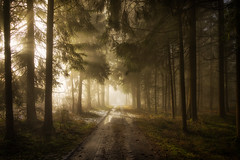 Walk With Me (Stefan (back from Scotland, but need some time)) Tags: forest forestpath path way woods eerie light rays raysoflight raysofgod lurky murky atmosphere haunted tree trees mist fog misty foggy nature sonya7m2 sonya7ii sel2470gm shadow dark mystery backlit backlight