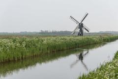 Foto-20170512_093239-JWmWM-70 (jacobwaterweg) Tags: dekemphaan molendekemphaan texel mill molen weidemolen windmill windmolen wipmolen