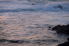 DSCF2256.jpg (Darren and Brad) Tags: pacificgrove asilomarstatebeach california montereycounty sunset asilomar asilomarconferencegrounds