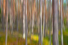 Spring forest (Jyrki Salmi) Tags: jyrki salmi kotka pyhtää valkmusa moronvuori finland outdoor forest
