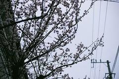 90400004 (木村雨) Tags: nikon f2 photomic a fujifilm superia400 xtra400 film filmphoto filmphotography