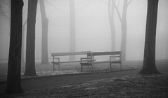 Wooden benches in the park. (Makedonskii) Tags: bench park wood material outdoors picnic nature scene tree grass woodland forest relaxation tranquil image backgrounds autumn seat summer day foliage nonurban old leisure season springtime photography beauty fog smoke black white