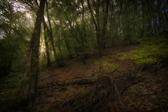 Into the woods (RigieNL) Tags: