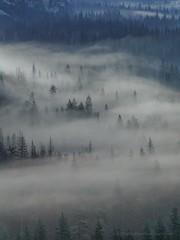 Heads Up (Jeffrey Sullivan) Tags: yosemite national park fog yosemitevalley sierranevada california usa canon eos 6d landscape night travel weather photography nature soft light photo copyright 2017 jeff sullivan may