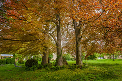 Three Sisters (Jannik Peters) Tags: trees colors beautiful chill loxia 21 sony fe a7