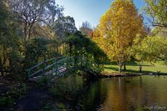 (Laszlo Papinot) Tags: mountmacedon famousflickrfive tievetaragarden lake pond bridge tree bush vegetation autumn