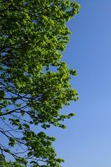 Elbhöhe (Loewe auf Hummer) Tags: elbe baum blau grün blue green tree fluss hamburg park blätter leaves ast zweig othmarschen hh himmel sky