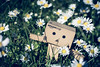 #Flower #Power #Danbo (graser.robert) Tags: 35mm blumenwiese d7100 danbo germany manga nikon outdoor power robertgraser flower flowers reinstädt thüringen deutschland de