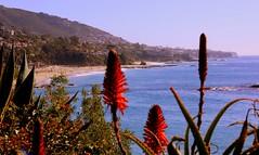 hot air baloon 349 (gilmavargas) Tags: lagunabeach california beach playa relax peacefullife