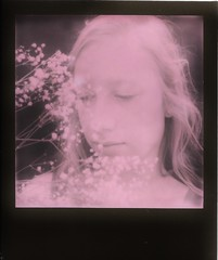 rhapsody in pink (Britt Grimm) Tags: instantphotography instant instantfilm impossibleproject instantgratification analogue analog analoguephotography polaroid polavoid polaroidsx70 pink snapitseeit sx70 springtime spring film filmisnotdead flowers flora filmphotography babysbreath believeinfilm duochrome