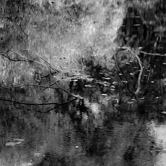 Riverside Reflections 008 (noahbw) Tags: captaindanielwrightwoods d5000 dof nikon abstract autumn blackwhite blackandwhite blur branches bw depthoffield forest landscape leaves monochrome natural noahbw reflection square trees water woods