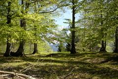 Mittenwald - auf dem Weg zur Korbinianhütte