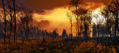 """""""Alone"""" (L1netty) Tags: thewitcher3 screenshot games gaming reshade pc cdprojektred landscape sky swamp trees sun geralt evening panorama stranger nature outdoor fantasy scenery 10k pano color orange clouds videogame"""