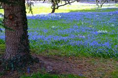 2017-03-12 Karlsruhe Blaues Wunder 0016.jpg (marathon.michael) Tags: schlosparkkarlsruhe 2017 orte einrichtungen jahreszeit badenwürtemberg park frühling karlsruhe deutschland sehenswürdigkeit zeit
