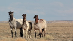Red Desert Mares (chad.hanson) Tags: mustangs wyoming wildhorses wildlife reddesert