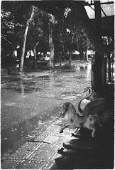 Rhythm Of the Rain (dzunglv) Tags: bnw asian night rain street silent blackandwhite contrast vietnam lonely sound monochrome eos3 ef50mm18stm nopeople summer walk streetlife midnight outdoor film analogue analog