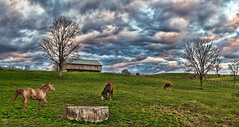 IMG_3228-29-38PRtzl1RscTBbLGER (ultravivid imaging) Tags: ultravividimaging ultra vivid imaging ultravivid colorful canon canon5dmk2 clouds farm fields scenic rural rainyday stormclouds sunsetclouds barn horses