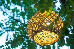 Branch Lighting (tomymagl1) Tags: branch lighting light illumunate summer evening relaxing leaf low olympus omd em10 45mm close focus defocus bokeh cactuscreativeteam