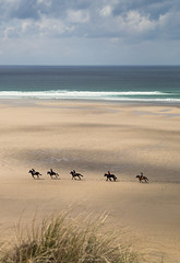 The Gallop (Sarah_Brooks) Tags: horseriding horse pony ponies beachride perranporth cornwall landscape livingtheview