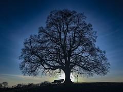 Baum (Blende2,8) Tags: badenwürttemberg friedenslinde wiese linde baum