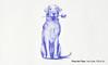 How to Draw a Labrador Retriever Dog - Narrated, step by step