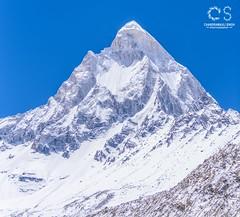 Shivling (6543M) - a majestic Himalayan gem (livingdocustyle) Tags: mountaineering climbing hiking travel northface gomukh ganges gangotriglacier uttarakhand himalaya indiatravel india peak summit mountain shivling