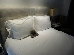 Rat hangs around the hotel in New York....lazy rat