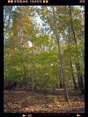 Light in the Woods (Pali K) Tags: analog filmisawesome filmphotography filmisnotdead fujifilm ga645w woods landscape nature jobo cpp2 tetenalc41 kodakportra160 kodak protra 160vc expiredfilm ishootfilm istillshootfilm ilovefilm heidelberg tango pmt drumscan drumscanner