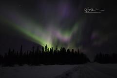 _64A1707 (Ed Boudreau) Tags: alaska northernlights auroraborealis nightphotography nightsky stars aurora winter winterscene winterscape landscape alaskalandscape landscapephotography auroratrapperscreek petersvillerd auroracolors
