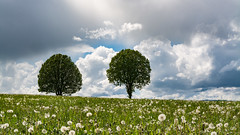elle&lui version printemps (alain.winterberger) Tags: arbre arbres tree trees duo two paysage ciel nuages nuage clouds nikon nature nikonpassion d7100 suisse switzerland schweiz svizerra sigma romandie région grosdevaud poliezpittet printemps spring