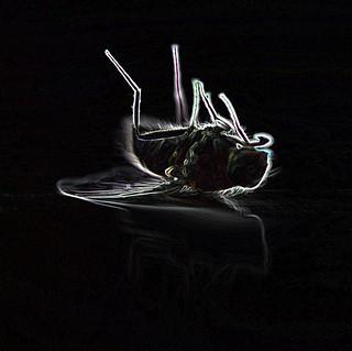 dead fly slide {explored}