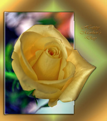 Happy Mother's Day-HSS!!! (☼Slowly Settling In☼) Tags: sliderssunday mothersday rose yellow outofbounds