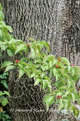 Hortulus Farms  (231) (Framemaker 2014) Tags: hortulus farm garden estate wrightstown pennsylvania bucks county united states america