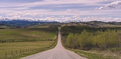 No fixed plans (Tracey Rennie) Tags: fence landscape alberta nearblackdiamond spring mountains rockies rockymountains foothills road gravelroad drivingaroundaimlessly