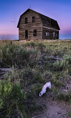 Old Building and Antelope Skull (Tom Herlyck) Tags: sunset decaying southeastcolorado colorado abandoned neglected beautiful greatamericandesert highplains sagebrush southeasterncolorado southerncolorado skull amazing flickr prairie spring grasslands easterncolorado old decay grass green homestead light lightroom may ranch shortgrassprairie sony a7rii