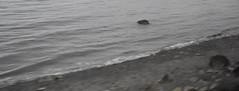 Scenery (Adventurer Dustin Holmes) Tags: 2017 water ocean bay pacificocean washington shore beach scenery scenic