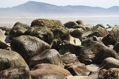 Oceanside, Oregon beach (nikname) Tags: oceansideor oceanside oceansidebeach oceansideorbeach oregonbeaches netartsbay netartsbayor pacificnwbeaches oregoncoast sandybeaches rockybeaches rocks