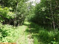 DSCF0949 (Okanagan Trail Running) Tags: okanagantrailrunning crawfordtrails kelownabc
