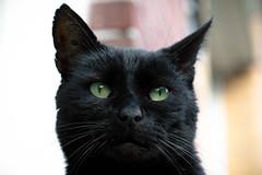 My favorite cat (katjacarmel) Tags: cat black kat dier animal portrait zwart gato chat kitten cute pet huisdier