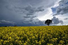 L'orage arrive (Excalibur67) Tags: nikon d750 sigma globalvision 24105f4dgoshsma paysage landscape ciel cloud sky nature nuages orage arbre tree