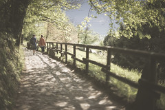A dreamy path (maxlaurenzi) Tags: montisola monte isola iseo lake spring dreamy ethereal blur 50mm walking people relax nature trees silence path movie