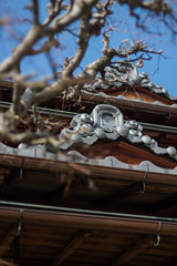 philosopher's walk, Kyoto (Nadialeesi) Tags: canon canoneos7d eos eos7d 7d japan asia 2017 spring travel travelphotography wanderlust wonderlust trip city urbanbeauty naturallight light philosopherswalk kyoto freedom naturalight sunny sunlight sun