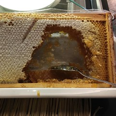 Actual piece of a honeycomb available to scrape wax and honey out of for breakfast. This was at @hiltonhotels Heathrow T5, my favourite hotel in that area. #honeycomb #breakfast #traveldiaries