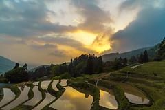 室谷の棚田 (Yasumitu-Ogawa) Tags: 室谷の棚田 島根県 浜田 夕日 夕焼け そら 雲 japan terraced paddy field cloud