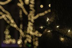 The Season (phillytrax) Tags: philadelphia philly pa pennsylvania cityofbrotherlylove 215 city urban usa america unitedstates metropolis metropolitan southphilly southphiladelphia eastpassyunkcrossing miracleon13thstreet christmas christmaslights depthoffield