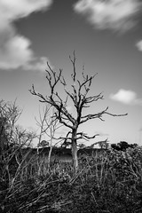 Bare Tree (Number Johnny 5) Tags: countryside tamron d750 nikon tree bare honing monochrome black decay rural 2470mm norfolk white