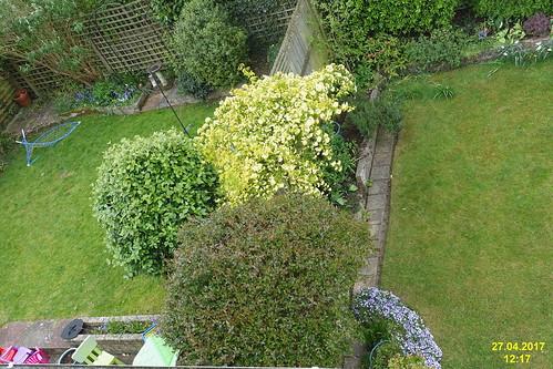 Back garden A